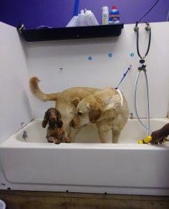 You need a bath! Spa time!
