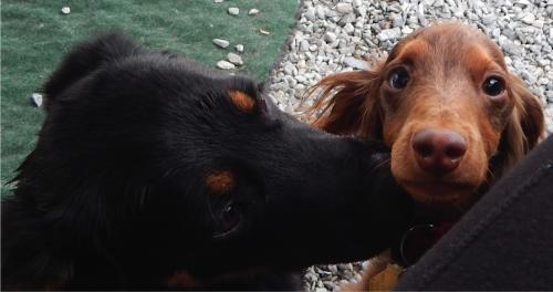 Mwah!